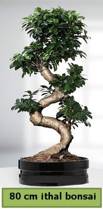 80 cm özel saksıda bonsai bitkisi  Karşıyaka çiçek gönderme
