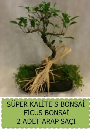 Ficus S Bonsai ve arap saçı  Karşıyaka çiçek gönderme