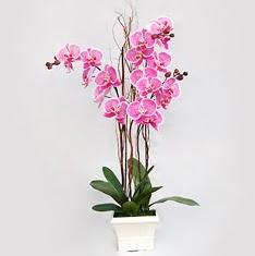 Karşıyaka cicek , cicekci  2 adet orkide - 2 dal orkide
