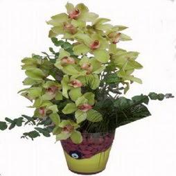 2 dal orkide  Karşıyaka çiçek yolla , çiçek gönder , çiçekçi   cam vazo içerisinde çiçek model