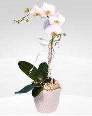 1 dallı orkide saksı çiçeği  Karşıyaka yurtiçi ve yurtdışı çiçek siparişi