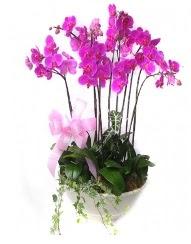 9 dal orkide saksı çiçeği  Karşıyaka kaliteli taze ve ucuz çiçekler