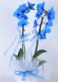 2 dallı mavi orkide  Karşıyaka çiçek siparişi sitesi