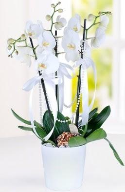 3 dallı beyaz orkide  Karşıyaka çiçek gönderme sitemiz güvenlidir