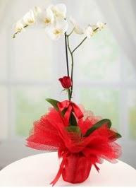 Tek dal beyaz orkide tek dal kırmızı gül  Karşıyaka çiçek siparişi sitesi