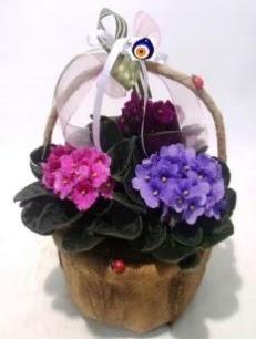 Sepet içerisinde 3 adet menekşe  Karşıyaka 14 şubat sevgililer günü çiçek