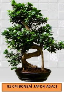 85 CM Japon ağacı Bonsai saksı bitkisi  Karşıyaka çiçek , çiçekçi , çiçekçilik