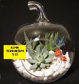 5 kaktüslü Elma terrarium orta boy  Karşıyaka çiçek siparişi vermek