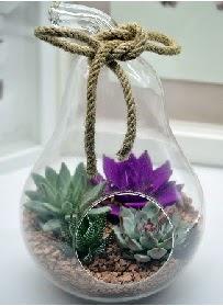 Orta boy armut 3 kaktüs terrarium  Karşıyaka çiçek siparişi sitesi