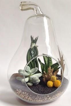 Orta boy armut 5 kaktüs terrarium  Karşıyaka çiçek , çiçekçi , çiçekçilik