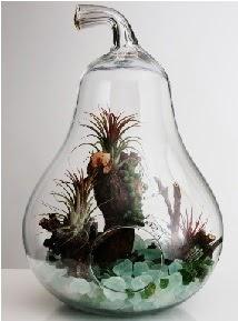 Orta boy Armut 6 adet kaktüs terrarium  Karşıyaka hediye çiçek yolla