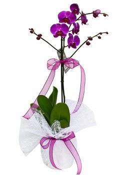 Tek dallı mor orkide  Karşıyaka çiçek gönderme