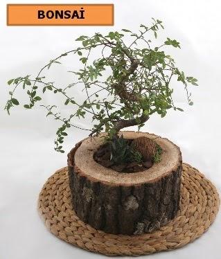 Doğal ağaç kütük içerisinde bonsai bitkisi  Karşıyaka İnternetten çiçek siparişi