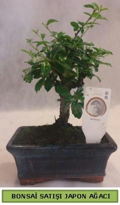 Minyatür bonsai ağacı satışı  Karşıyaka çiçek yolla