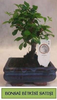 Bonsai ithal görsel minyatür japon ağacı  Karşıyaka çiçek , çiçekçi , çiçekçilik