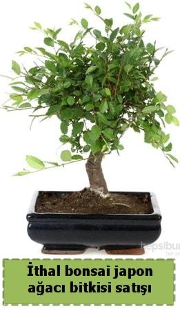 İthal bonsai saksı çiçeği Japon ağacı satışı  Karşıyaka çiçek yolla , çiçek gönder , çiçekçi