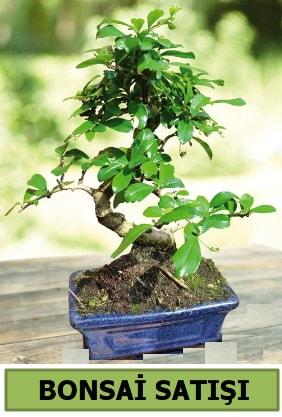 Çam bonsai japon ağacı satışı  Karşıyaka çiçekçi telefonları