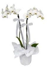2 dallı beyaz orkide  Karşıyaka kaliteli taze ve ucuz çiçekler