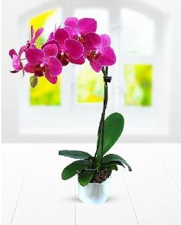 Tek dallı mor orkide  Karşıyaka çiçekçi telefonları