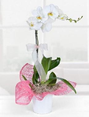 Tek dallı beyaz orkide seramik saksıda  Karşıyaka çiçek yolla