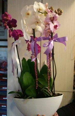 Mor ve beyaz ve pembe 6 dallı orkide  Karşıyaka çiçek , çiçekçi , çiçekçilik