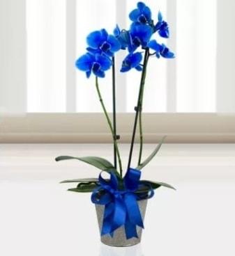 Çift dallı mavi orkide  Karşıyaka çiçekçi telefonları