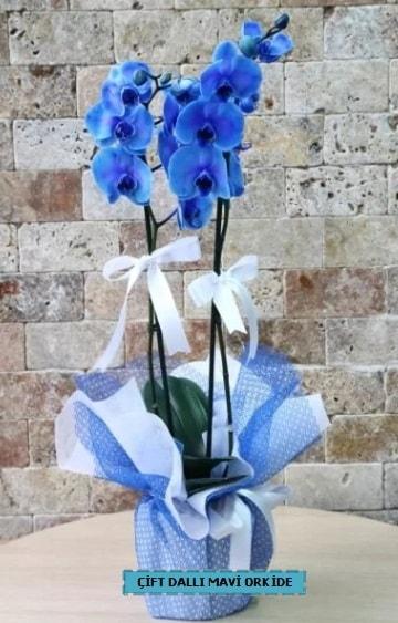 çift dallı ithal mavi orkide  Karşıyaka çiçek gönderme sitemiz güvenlidir
