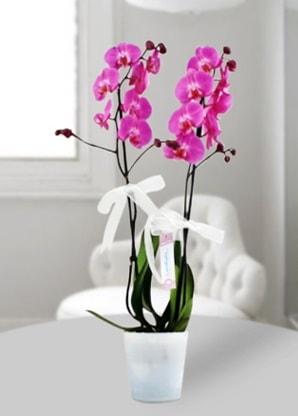 Çift dallı mor orkide  Karşıyaka internetten çiçek satışı